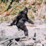 Misteri-Bigfoot-Il-gigante-fantasma
