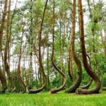 Fatti inspiegabili e Misteri-Hoia-La-misteriosa-foresta-di-Hoia