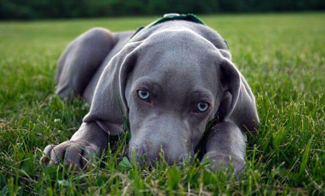 I cani più belli del mondo (2)