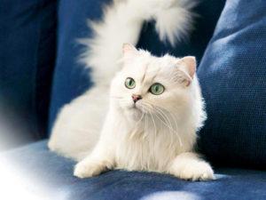 gatti più belli: ankara