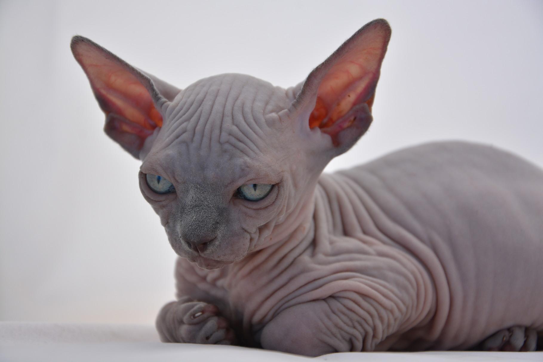 I 23 gatti più belli del mondo – TOP!